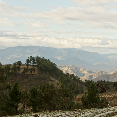 Montañas cafetales Palencia
