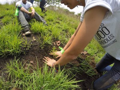 guatemala plantemos 100 arboles