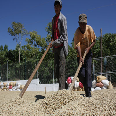 cafetales-conguaco-jutiapa-guatemala