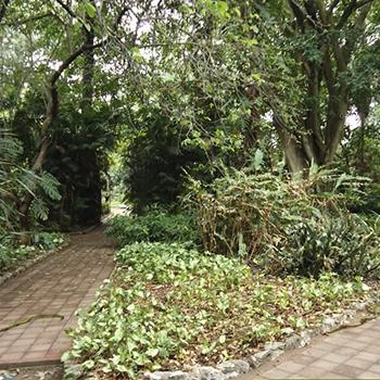 Museo de Historia Natural y Jardín Botánico de la USAC en Guatemala