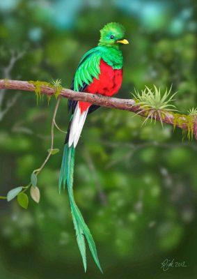 Características del Ave Nacional de Guatemala, El Quetzal