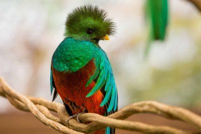 Lugares en Guatemala donde se puede ver al Quetzal