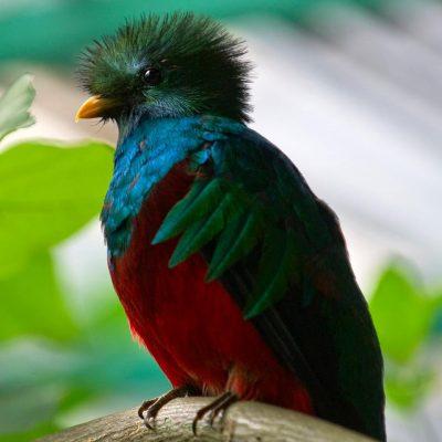 Qué día se celebra el día del Quetzal Ave Nacional de Guatemala