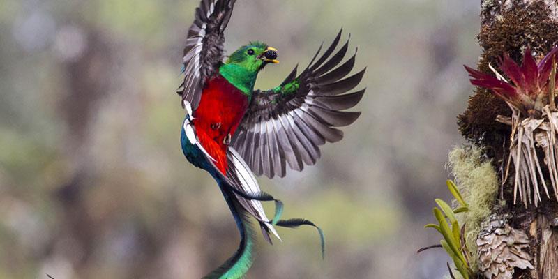 dia-del-quetzal
