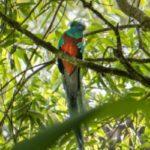 Biotopo del Quetzal, Baja Verapaz