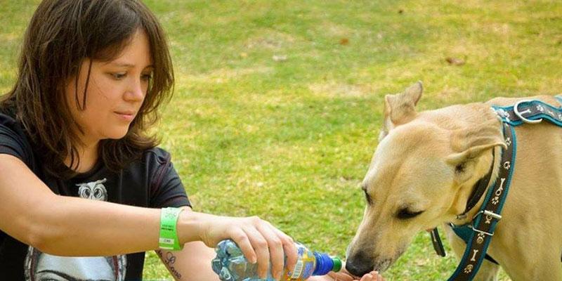 Cómo pertenecer a la Asociación de Amigos de los Animales
