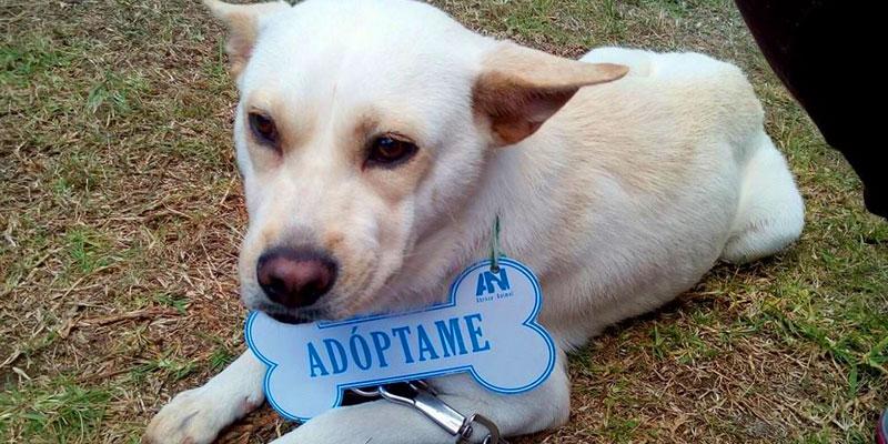 Cómo pertenecer al voluntariado de Abrazo Animal Guatemala