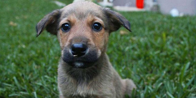 Cómo pertenecer al voluntariado de Adopta una Mascota Guatemala