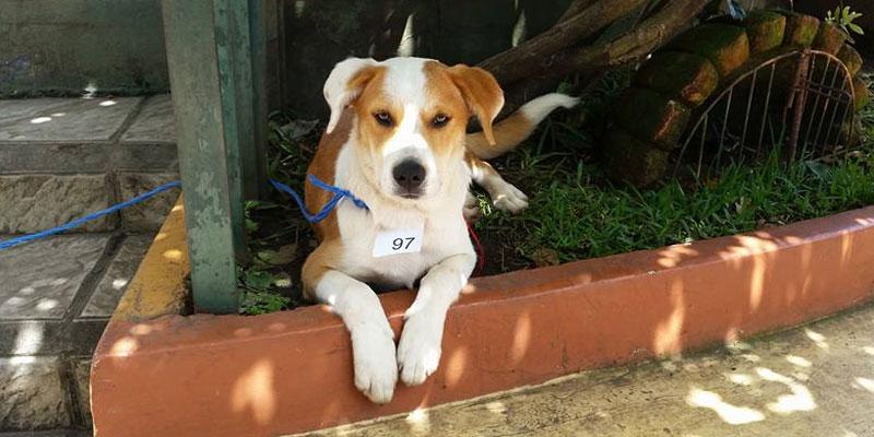 Cómo pertenecer al voluntariado de Guate unida por los Animales