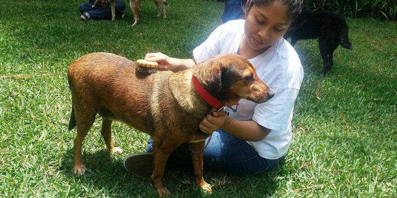 Cómo pertenecer al voluntariado de Paz Animal Guatemala