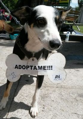 adopcion abrazo animal