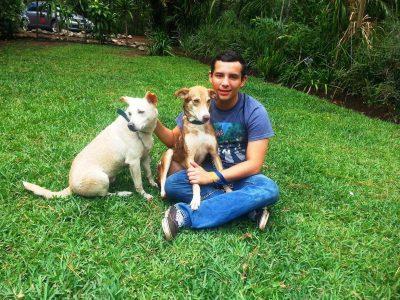 areas de accion paz animal