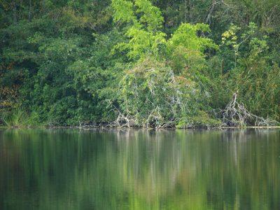 biotopo dos lagunas peten