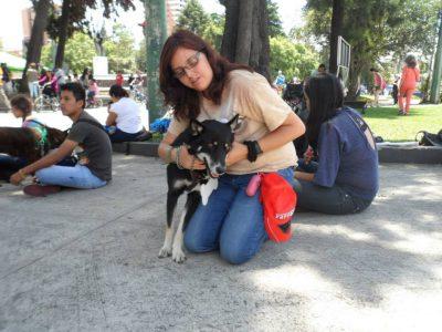 voluntariado abrazo animal