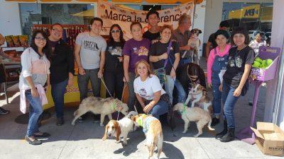 voluntarios guate unida por los animales