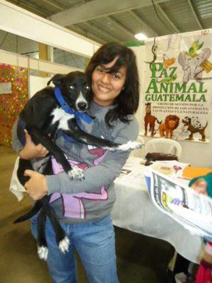 voluntarios paz animal