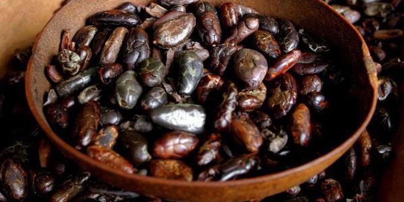 El origen del cacao en Guatemala