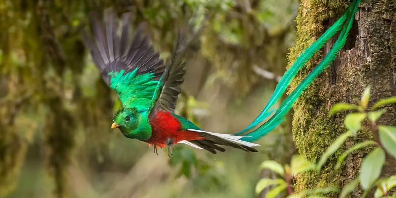 La leyenda del Quetzal