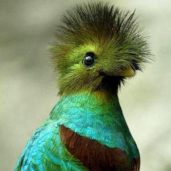 quetzal guatemala