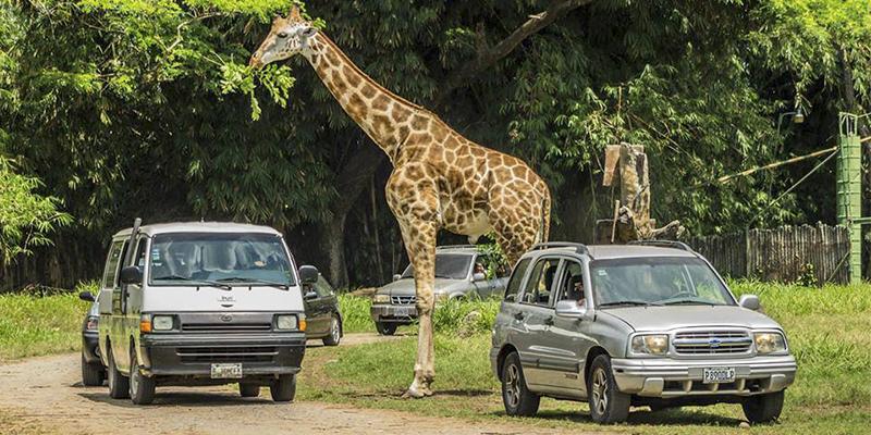 Auto Safari Chapín, Escuintla