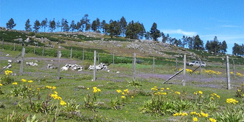 Municipio de San Juan Ixcoy, Huehuetenango