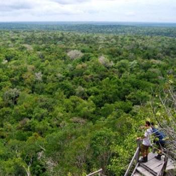 origen-nombre-guatemala-bosques-arboles
