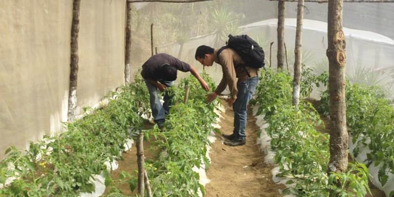 Día del Perito Agrónomo en Guatemala