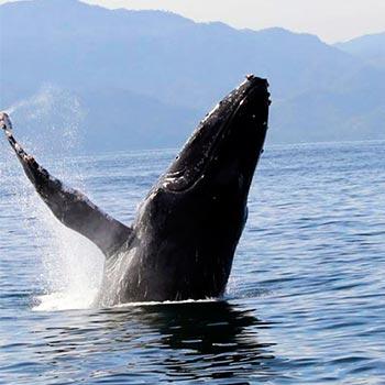 Avistamiento-de-ballenas-en-Guatemala