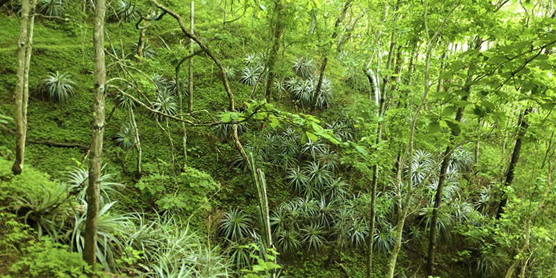 Reserva Natural para la Conservación del Heloderma y el Bosque Seco en Zacapa