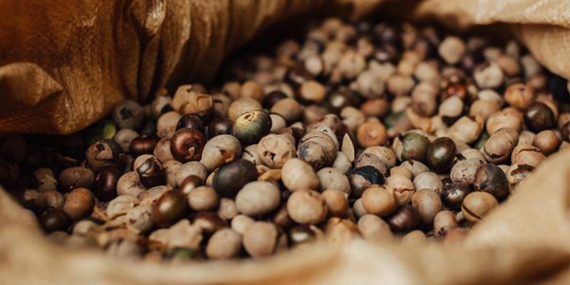 El Ramón, semilla ancestral guatemalteca