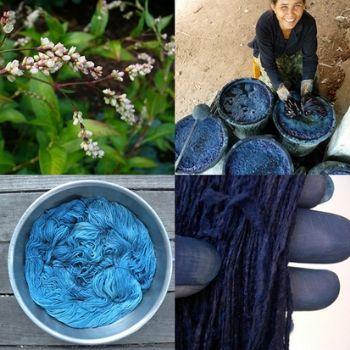 azul maya planta