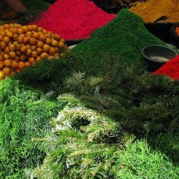 nacimiento guatemalteco pino