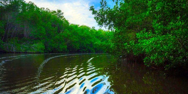 Área de Protección Especial Manchón Guamuchal, Retalhuleu