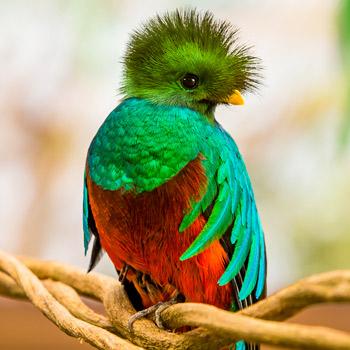 origen-del-nombre-quetzaltenango-el-quetzal