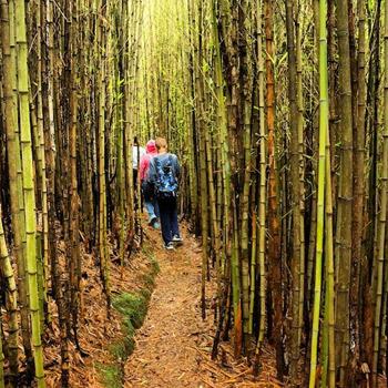 ram-tzul-cascada-reserva-natural-baja-verapaz-purulha-guatemala-bosque-bambu