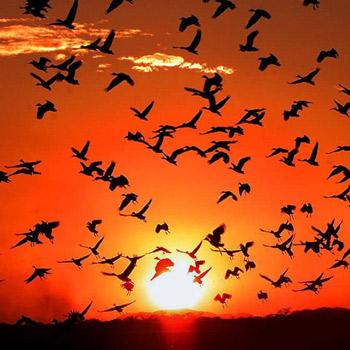 vida-silvestre-en-guatemala-aves-migratorias