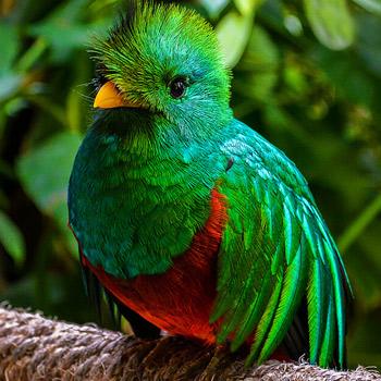 vida-silvestre-en-guatemala-quetzal