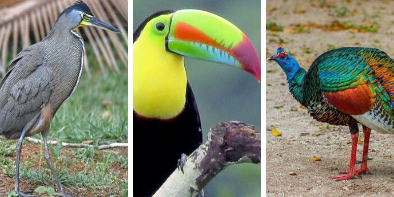 aves-parque-nacional-tikal-peten-guatemala