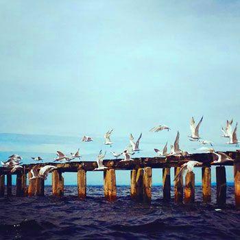 refugio-vida-silvestre-punta-de-manabique-puerto-barrios-izabal-guatemala-fauna-aves-migratorias