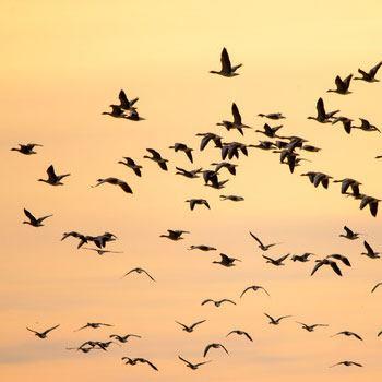 aves-migratorias-en-guatemala-habitats