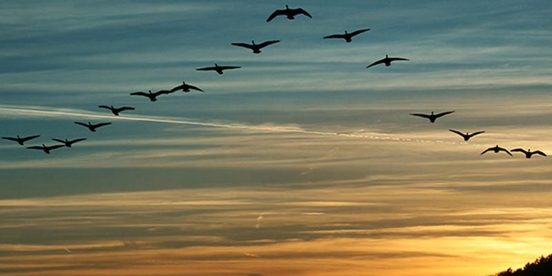 aves-migratorias-en-guatemala