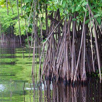 canal-de-chiquimulilla-guatemala-historia-manglares-playa