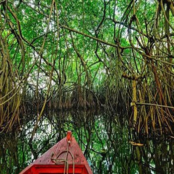 canal-de-chiquimulilla-guatemala-historia-manglares