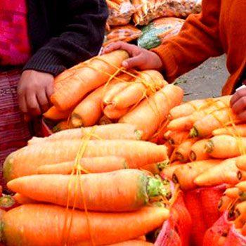departamento-de-quetzaltenango-guatemala-verduras-gigantes-almolonga