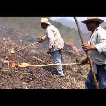 rio-usumacinta-guatemala-actividades-agricultura-roza-tumba-quema