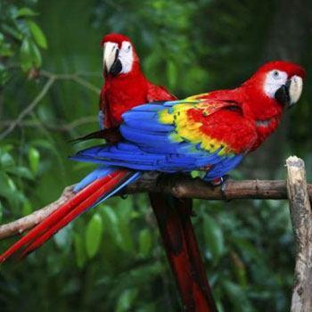 rio-usumacinta-guatemala-fauna-guacamaya-roja