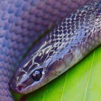 reptiles-anfibios-parque-nacional-tikal-culebras-serpientes