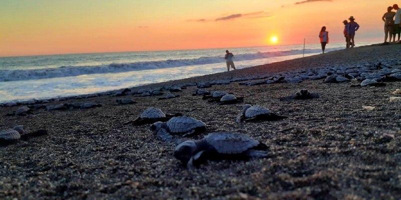 tortugas-marinas-guatemala