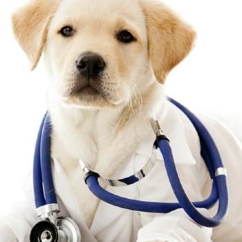 historia-colegio-profesional-medicos-veterinarios-guatemala-celebracion-eventos-historicos