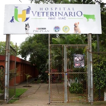 historia-colegio-profesional-medicos-veterinarios-guatemala-hospital-veterinario-usac